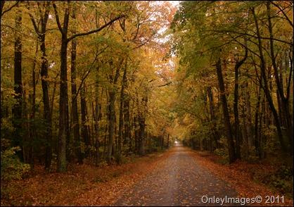 fall scene2 Nassawadox