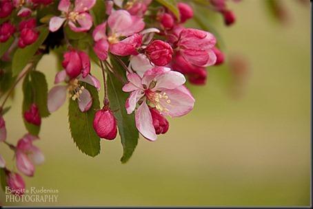 blom_20120520