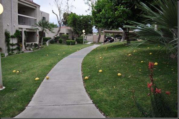 04-25-11 1 lemons 01