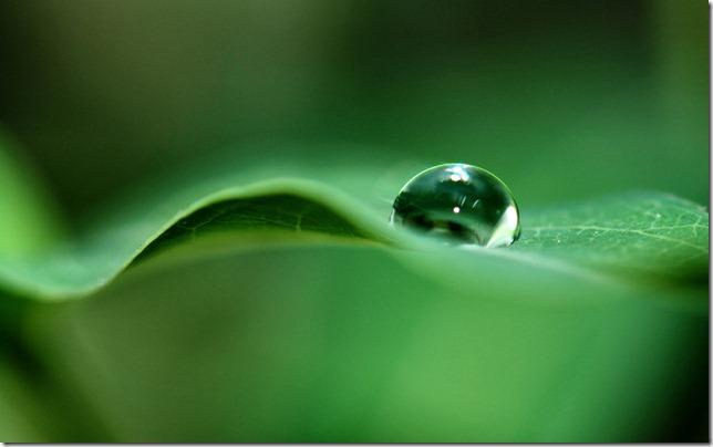 Salve o verde