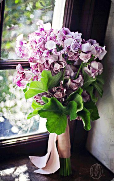 sweet peas 528479_601645716517660_378531862_n oleander
