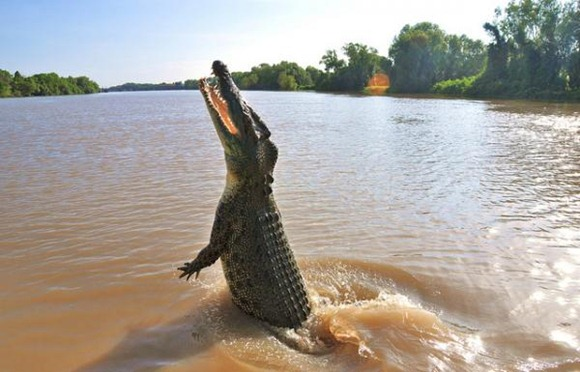 saltwater-crocodile.img_assist_custom-600x385