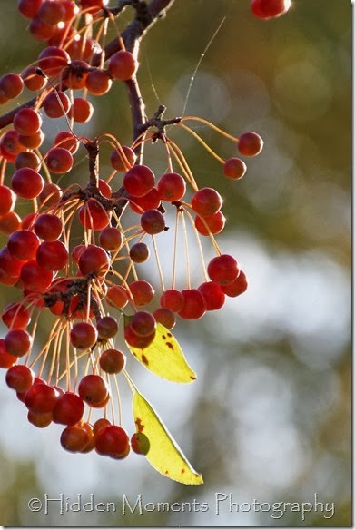 Fall Berries 1