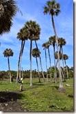 Under palms 2