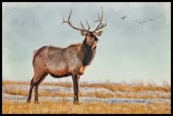 Big Elk on The Prairie