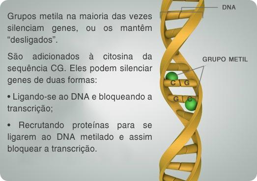 metilação DNA
