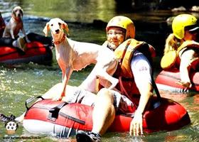 Pets Adventure 13 (159_1) (46)