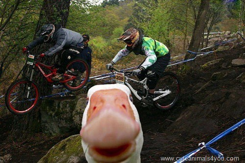 50_Funniest_Animal_Photobombs_Of_All_Time_44