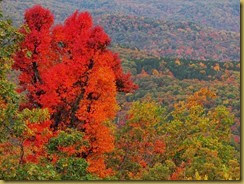 CAN Fall Foliage 076