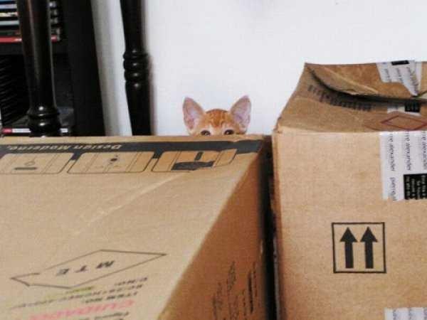 Os gatos não são muito bons em esconde-esconde 2