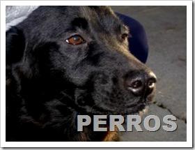 PERROS ARANJUEZ