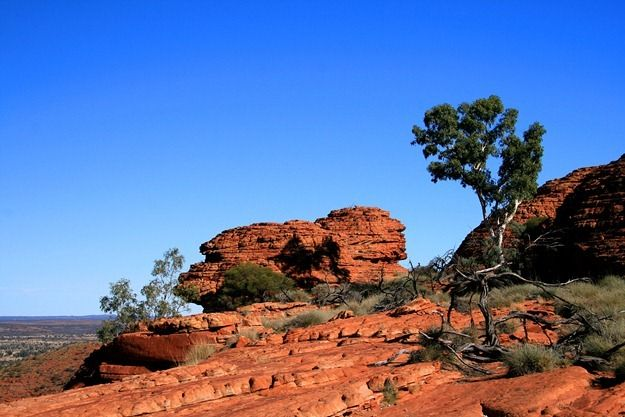 Tree against blue sky Kings Canyon outback Australia