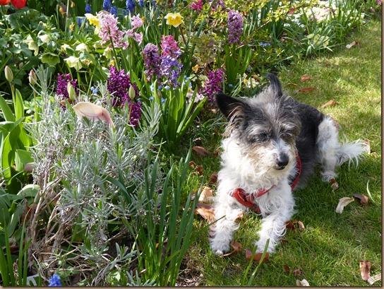 garden colours 007
