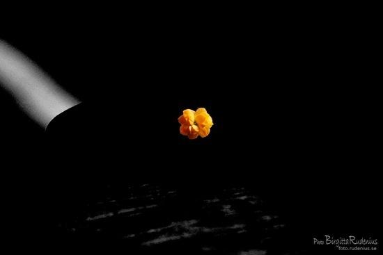 bw_20111011_infrarod