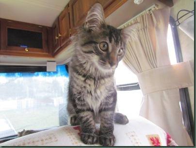 Baxter 4 months