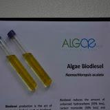 Algae For Biodiesel Project