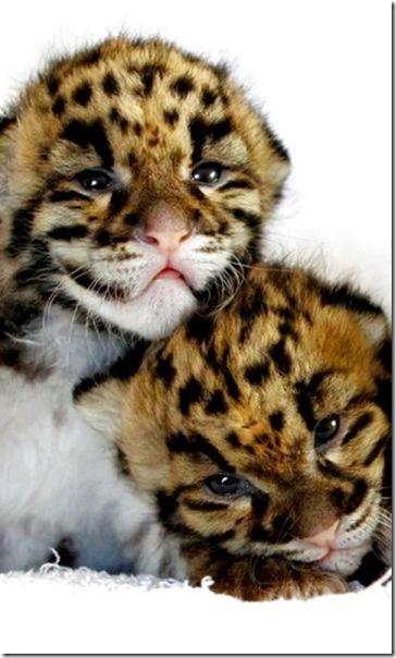 funny-animals-cute-40