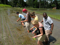 Learning how to plant rice - Eco Bike Tour - Ubud Region