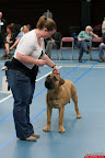 20130510-Bullmastiff-Worldcup-0197.jpg