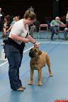 20130510-Bullmastiff-Worldcup-0197.jpg