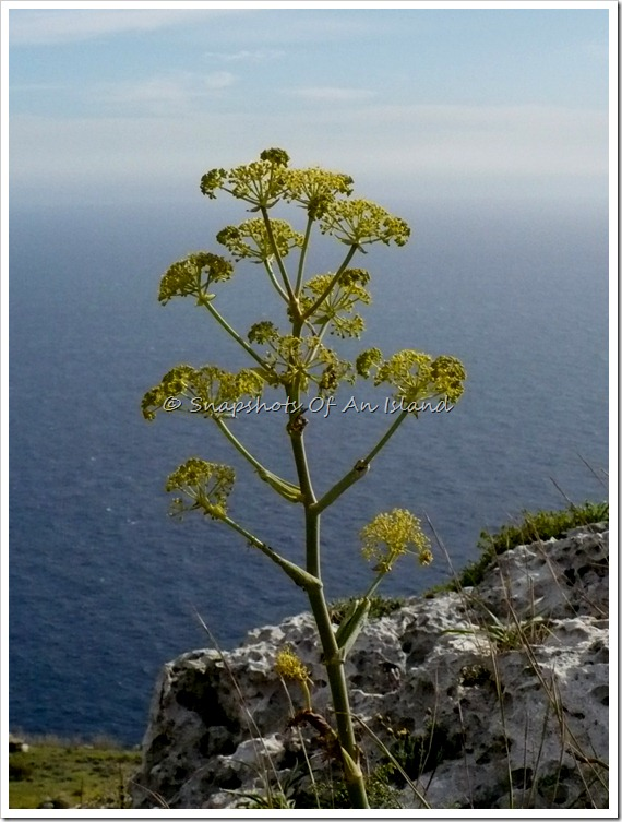 Dingli Cliffs (9)