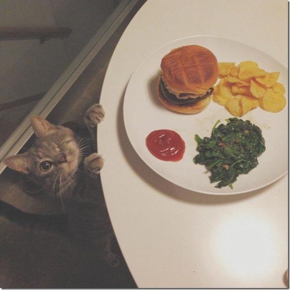 funny-animals-cute-14