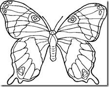 colorear mariposas pintaryjugar com (11)