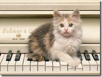 gato pianista blogdeimagenes (34)