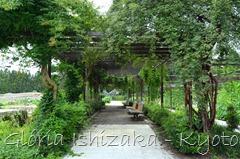 Glória Ishizaka -   Kyoto Botanical Garden 2012 - 71
