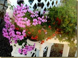 2013-03-12 - AZ, Yuma - Cactus Gardens, My Garden -001