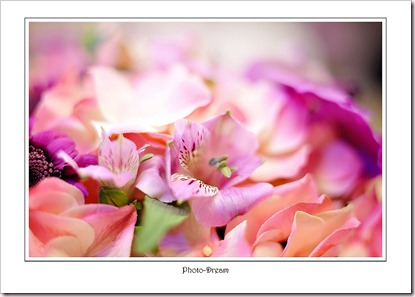 Photo-Dream__290