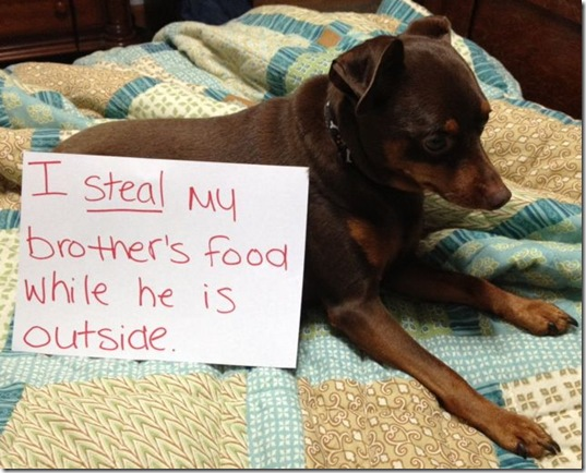 dog-shaming-bad-19