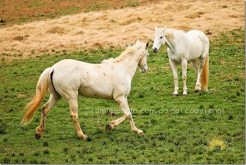 horses-5504