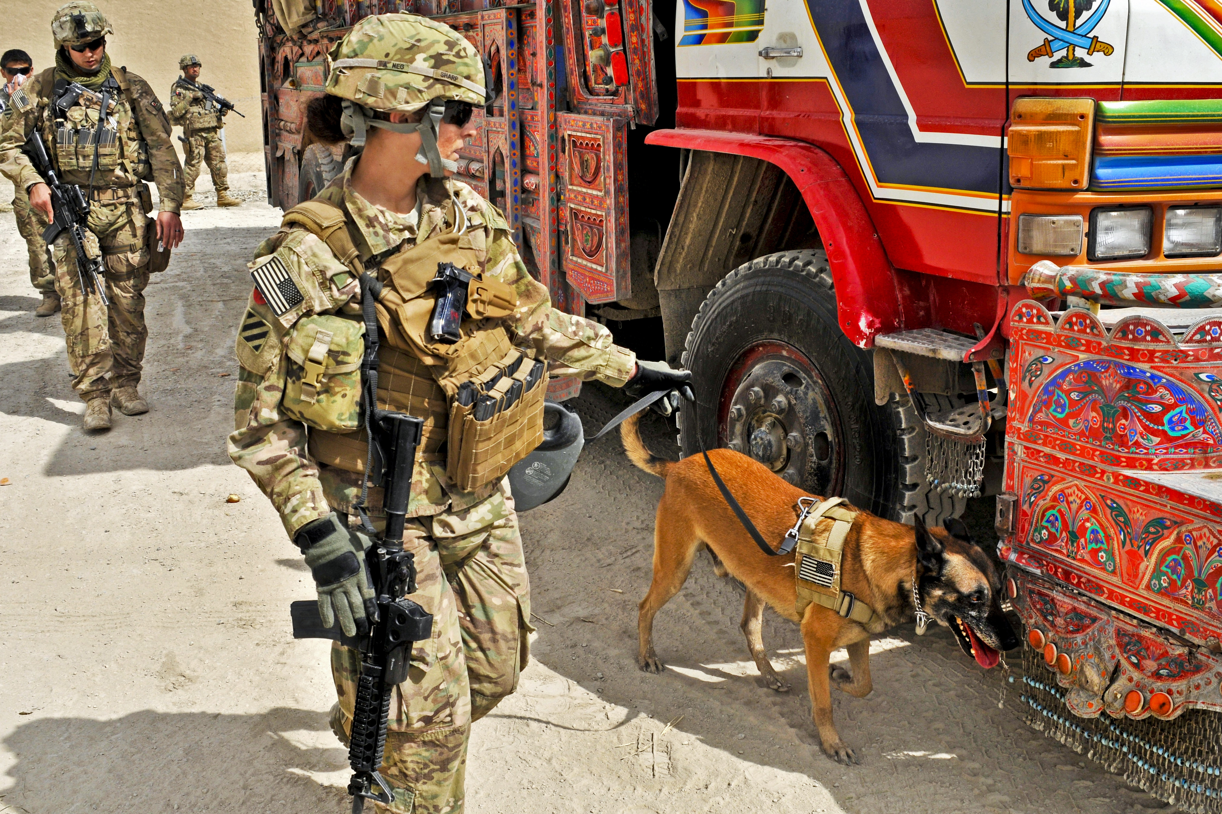 photo essay dogs in the military Photos: the 10 best photo essays of january 2015 here's a photo essay about us war dogs that appeared in foreign policy a world disrupted.