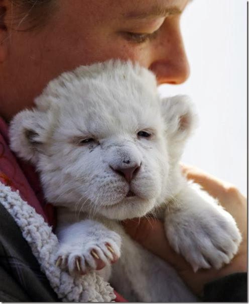 cute-baby-animals-15