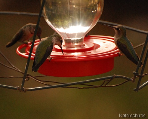 17. hummingbirds-kab