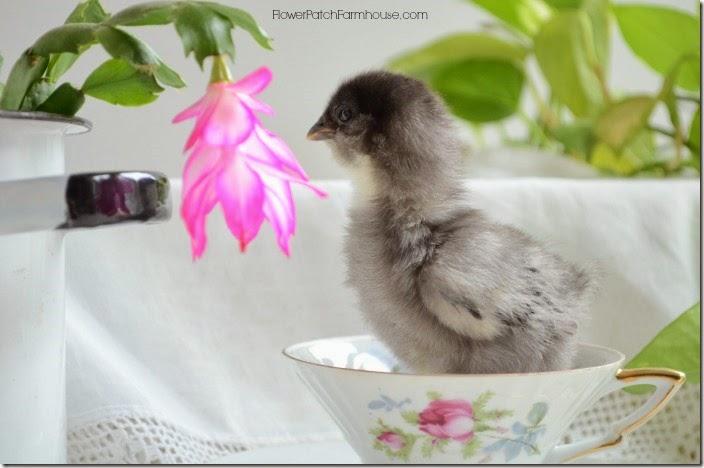 chickflower2700