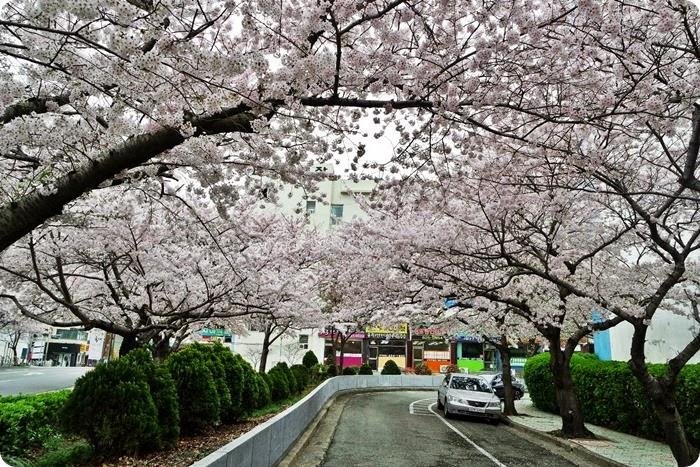 Japan April 2015 019
