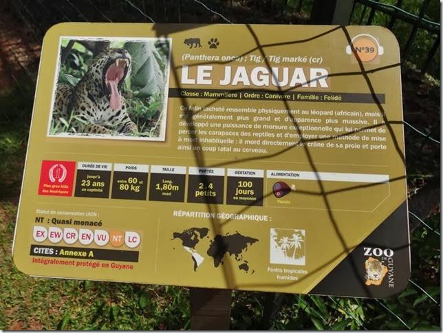 Cayenne_Zoo_DSC08081