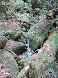 A small stream in Yakusugi land, Yakushima