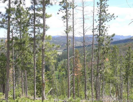 Black Hills Vista