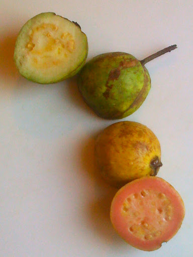 Guava shopping tip - look for one that's yellow; our green one wasn't quite ripe enough.