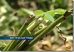 Кровь на кладбище напугала суеверных жителей украинского села
