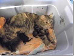 kittens day 1-3  05
