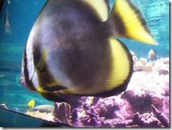 2012.09.02-027 aquarium