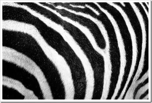 Inspiración blanco y negro 04