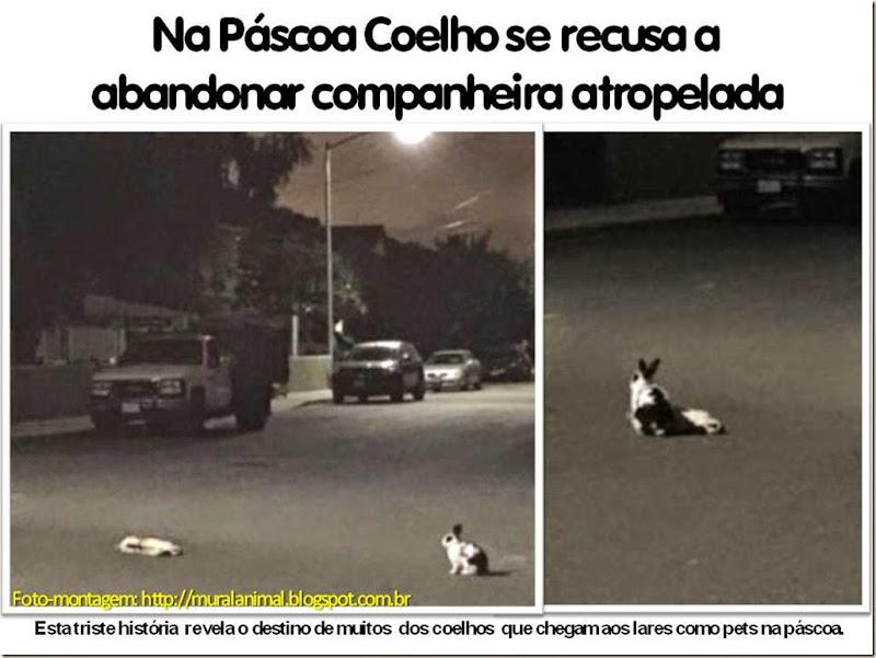 Na Páscoa Coelho se recusa a