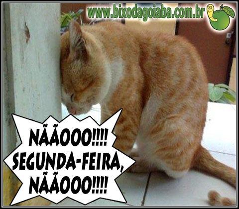 Síndrome do Garfield - Não! Segunda-feira, não!