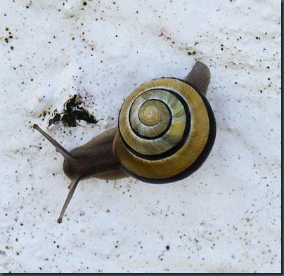 10-snail