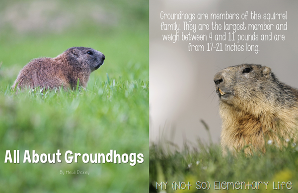 all about groundhogs big book